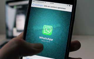 Что выбрать Skype или WhatsApp — плюсы и минусы сервисов