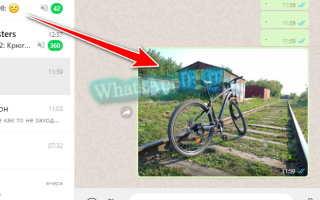 Как скачать фотографию из WhatsApp в галерею телефона